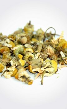 Chamomile Plant Tea